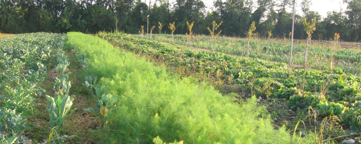 I nostri campi – crop