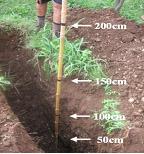 Anno 2015 - La terra è scura e fertile fino alla profondità di 180 cm